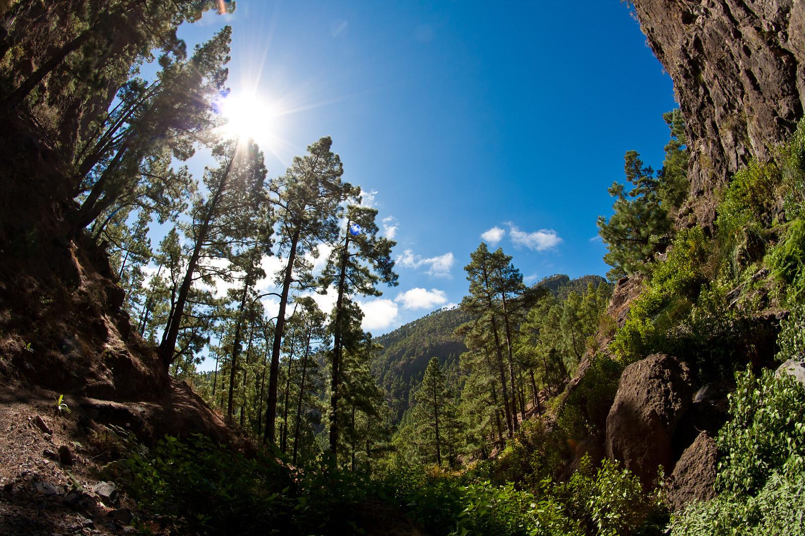Samyang halszem napsütéses erdőben